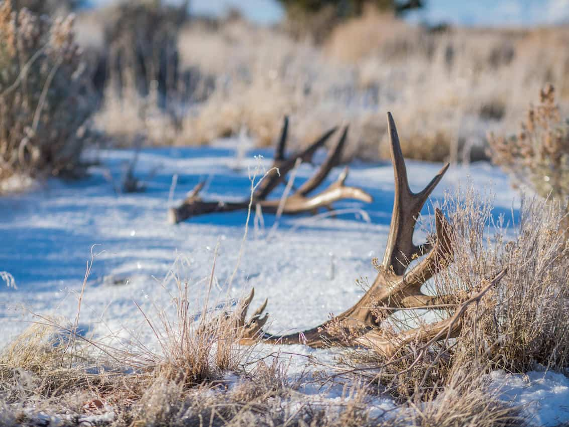 Shed Hunting Gear – Top Ten Things You Need To Take With You While Shed Hunting