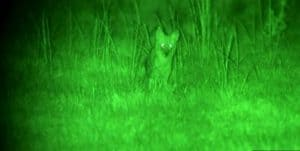 Best Night Vision Scope For Coyote Hunting – Full Buyers Guide